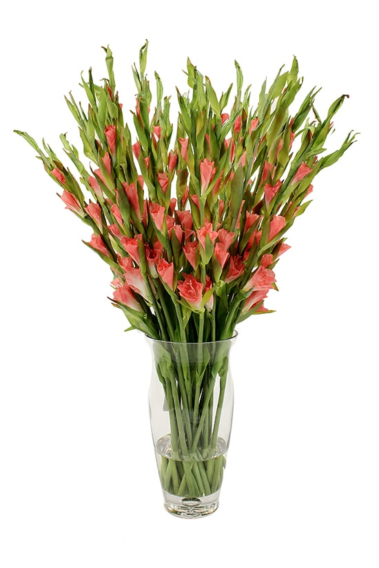 Bunch of tall salmon gladioli