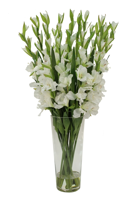 A cut of white gladioli