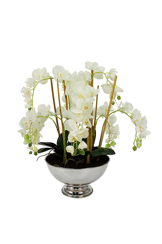 Potted white draping orhids on display in a chrome vase.