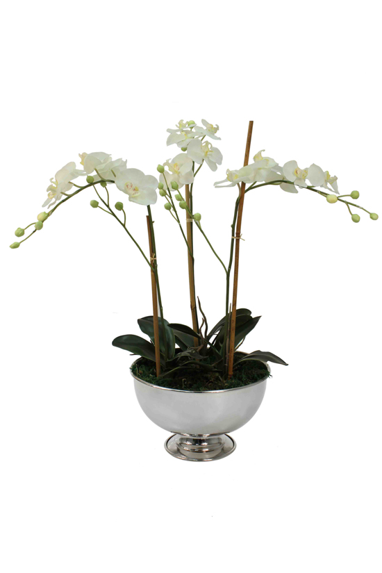 Potted white orhids on display in a round chrome vase.