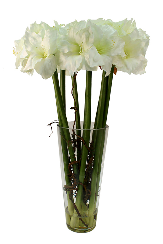 Large cream-white amaryllis