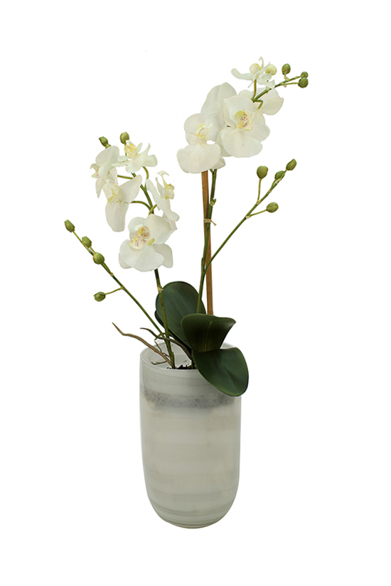 Single phalenopsis orchid in marbled glass
