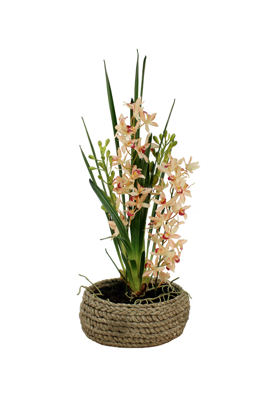 Potted in artificial soil, a cymbidium in stone rope ceramic